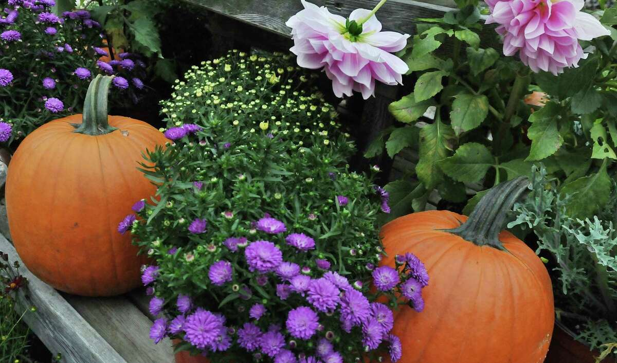 Town & Country Nurseries at 1036 Saybrook Road in Haddam. Catherine Avalone - The Middletown Press