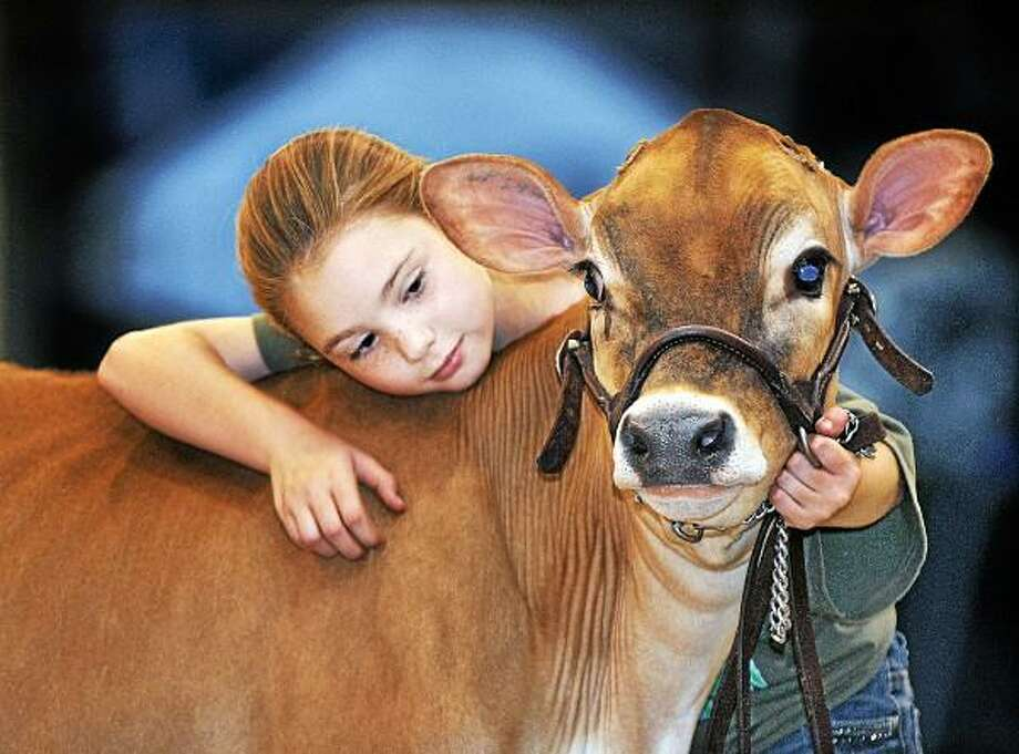 """Catherine Avalone - The Middletown Press  Durham resident Logan Naples Marut, 10 of  Deerfield Farm cuddles with her 4 month old Jersey calf Cady at the Middlesex and New Haven County 4H Fair at the fairgrounds in Durham in 2010. The 4-H Fair begins on Friday, August 2 at 5 p.m. and continues August 3 from 8 a.m. - 10 p.m. and August 4 from 8 a.m. - 5 p.m. at the fairgrounds in Durham. Visit <a href=""""http://www.4-hfair.org"""">www.4-hfair.org</a> for the schedule. / TheMiddletownPress"""