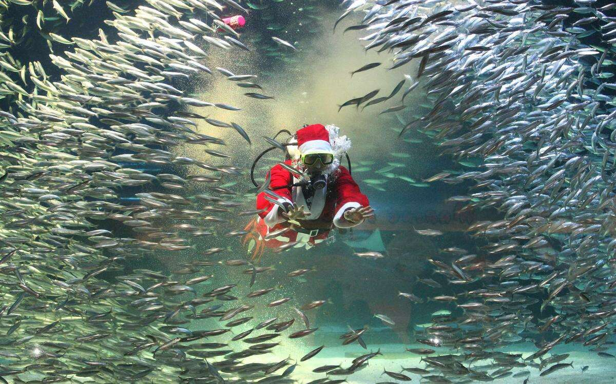 Dressed in a Santa Claus outfit, a diver feeds to sardines at the Coex Aquarium in Seoul, South Korea, Tuesday, Dec. 11, 2012. Christmas is one of the biggest holidays in South Korea, where over half of the population are Christians. (AP Photo/Ahn Young-joon)