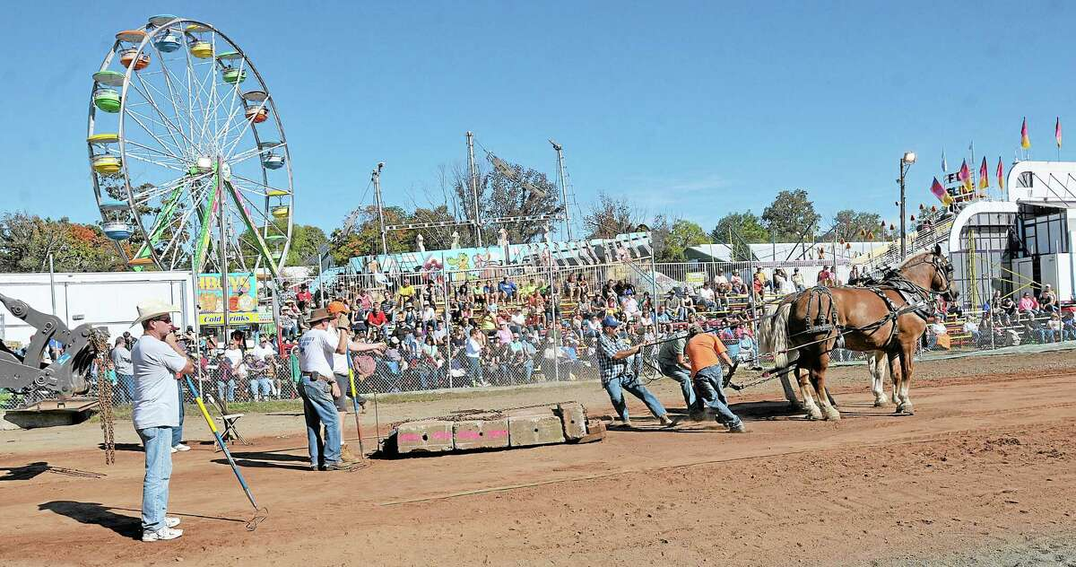 Horse pull ring action at the start of the 3300 lb. class at the Durham Fair Sunday afternoon. Catherine Avalone - The Middletown Press