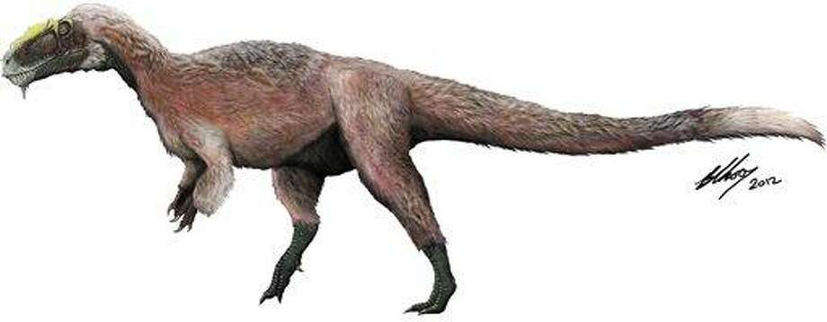 This artist concept provided by the Beijing Institute of Vertebrate Paleontology and Paleoanthropology shows a new species of tyrannosaur, Y. huali, discovered in China. A new study published in the journal Nature found that Y. huali, an earlier relative of T. rex had a feathery coat, suggesting that the king of dinosaurs may have also been fuzzy. Associated Press Photo: AP / Beijing Institute of Vertebrate Paleontology and Paleoanthropolo