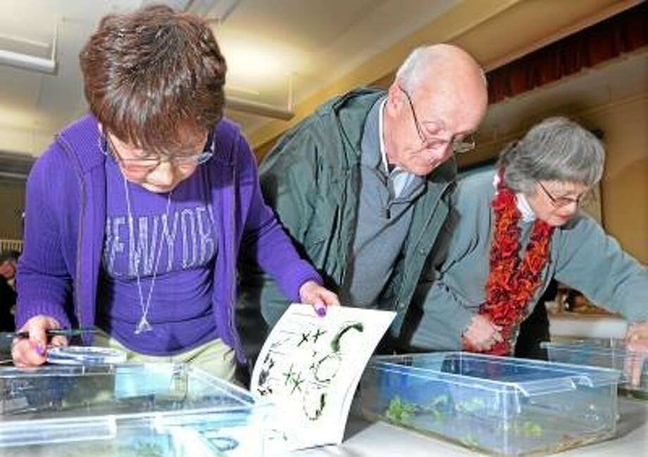 Catherine Avalone/The Middletown Press Middlefield residents Irene Angiletta, First Selectman Jon Brayshaw and Alexandra Taylor, right to left identify invasive aquatic plants during a plant identification quiz at the Lake Beseck Workshop held by the CT Agricultural Experiment Station at the Middlefield Community Center auditorium Monday night. / TheMiddletownPress