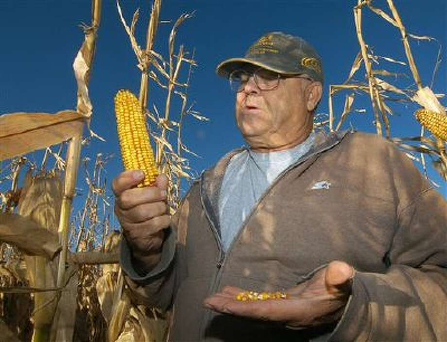 Robert Malsom checks corn in one of his fields near Roscoe, S.D. Malsam nearly went broke in the 1980s when corn was cheap. So now that prices are high and he can finally make a profit, he's not about to apologize for ripping up prairieland to plant corn. Photo: AP / AP