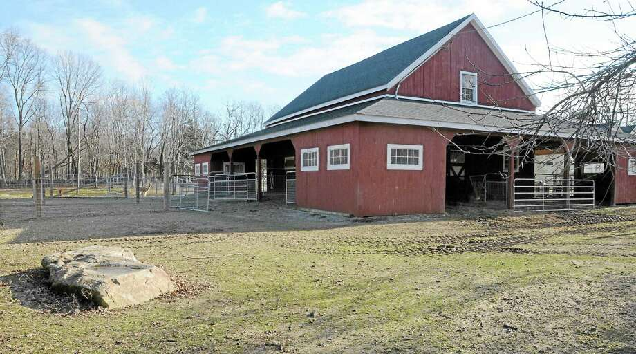 Four alpacas at Applesauce Acres in the Ivoryton section of Essex were killed on Dec. 23, 2011. (Mara Lavitt/New Haven Register) Photo: Journal Register Co.