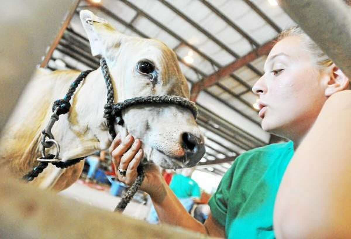 Middletown resident Amanda Balch, 18, of Greenbackers Farm snuggles up with a 4-month old Brown Swiss Holstein named Praise at the Middlesex & New Haven County 4-H Fair at the Durham Fairgrounds Friday evening . The fair runs today from 8 a.m. - 10 p.m. and Sunday from 8 a.m. - 4 p.m. Catherine Avalone - The Middletown Press