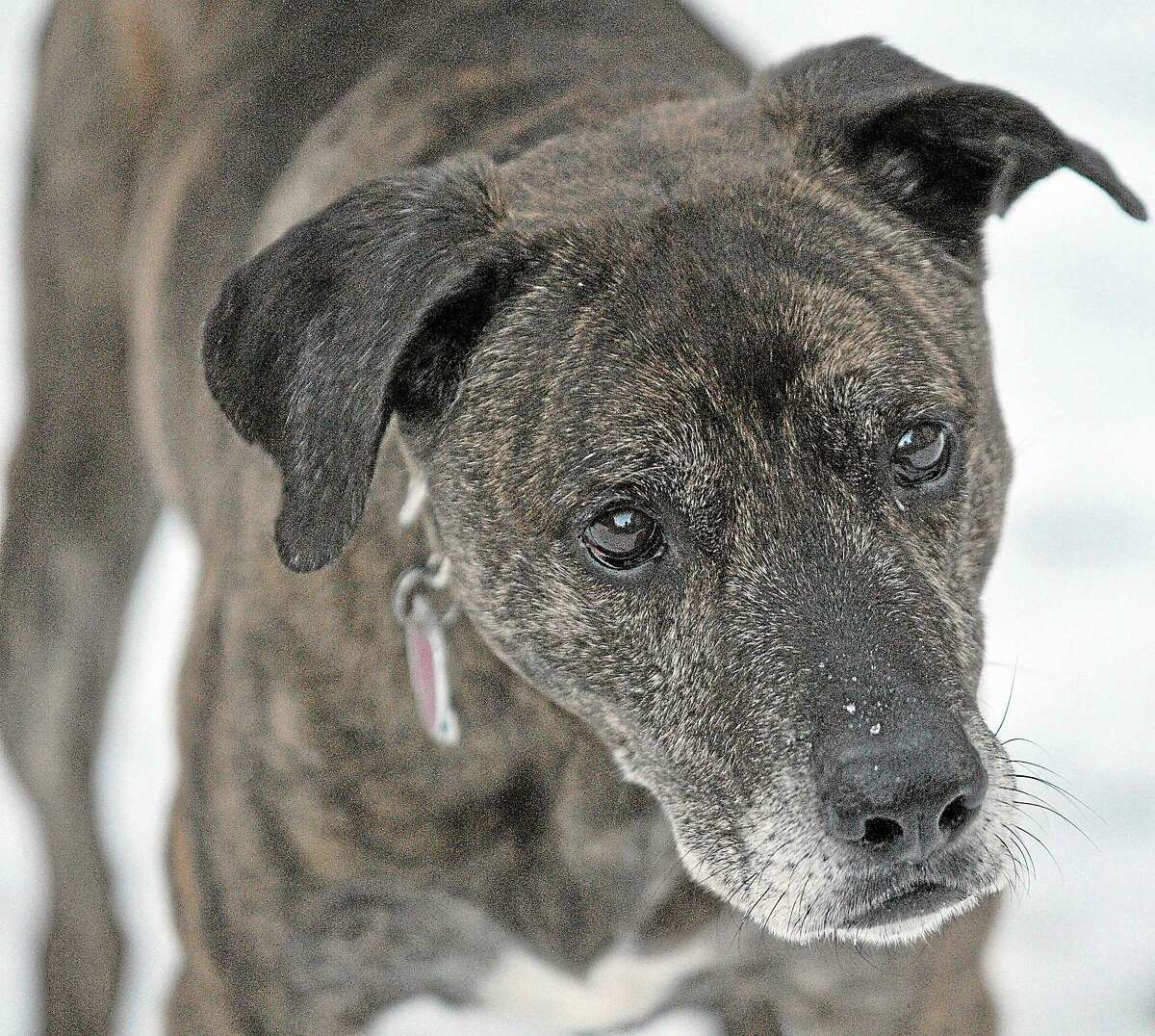 The owners of Gam, a lab-greyhound mix, agree with the state's tethering law prohibiting owners from chaining dogs during severe weather.