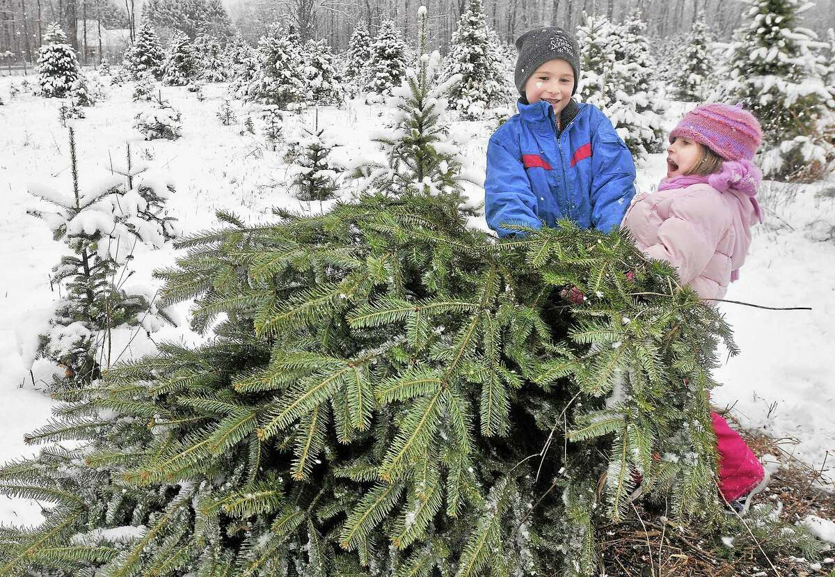After cutting down the perfect tree at Miller's Tree Farm in Durham Tuesday afternoon, Middletown resident Jacob O'Rourke, 6 and his 4-year-old little sister, Sara do everything to try to carry the tree without help from their father, Doug O'Rourke. Catherine Avalone - The Middletown Press