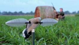 Wingshooters planning to head afield for the Sept. 1 opening of dove season will be among the more than a million Texans purchasing new hunting and fishing licenses over coming weeks. Current licenses expire Aug. 31. The 2017-18 licenses became available Aug. 15.