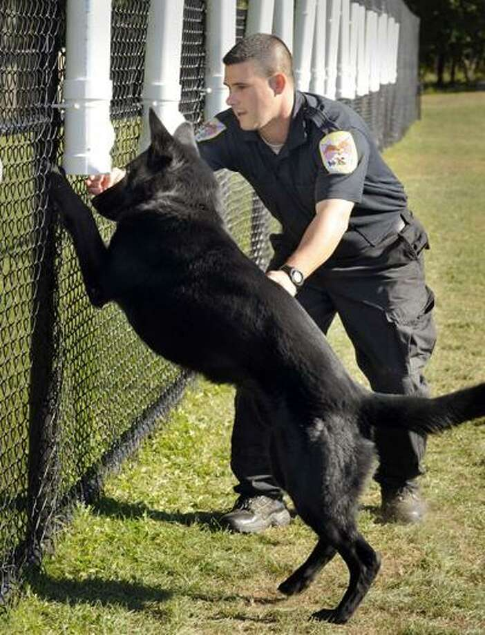 Danbury Police Officer Greg Topa teaches Zeke how to sniff out narcotics on Sept. 20. (AP) Photo: AP / The News-Times