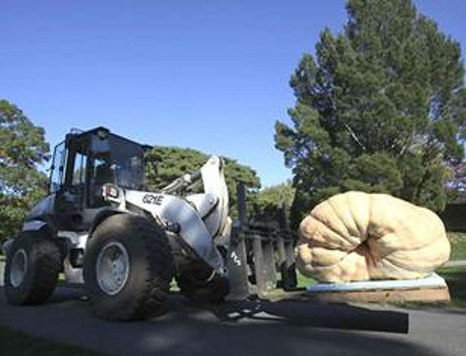 A forklift moves the largest pumpkin in the world, weighing 1,810.5 pounds, into place for display at the New York Botanical Garden in New York, Thursday, Oct. 21, 2010. The pumpkin, which was grown by Chris Stevens of New Richmond, Wis., will be on display through Oct. 31, 2010. (AP Photo/Seth Wenig) Photo: AP / AP