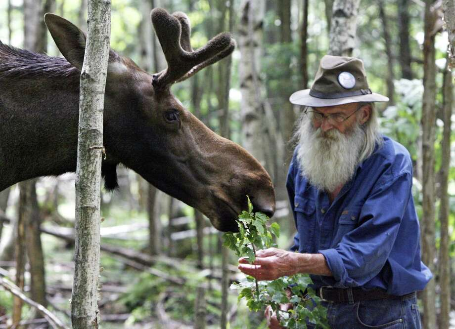 In this photo taken July 30, 2009, Pete the Moose is seen with David Lawrence in Irasburg, Vt.  Vermont lawmakers are reconsidering their adoption last year of a bill that pardoned Pete the Moose but also set a precedent some wildlife advocates think was improper.AP Photo/Toby Talbot) Photo: AP / AP