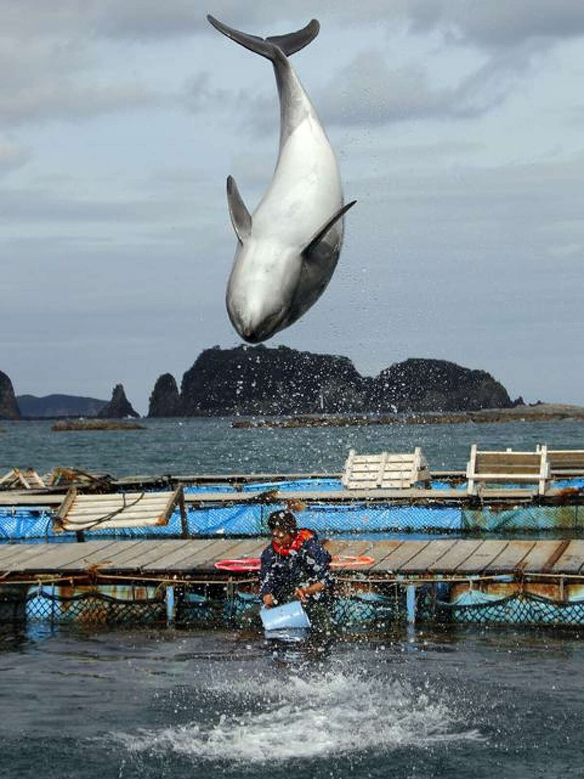 In this March 8, 2010, file photo, a dolphin demonstrates a flip at a dolphin pool in Taiji, southwestern Japan, where visitors can play with the animals. Fifty-five journalists, academics and film directors in Japan condemned Tuesday, June 8, 2010, intimidation and threats that led movie theaters to cancel screenings of