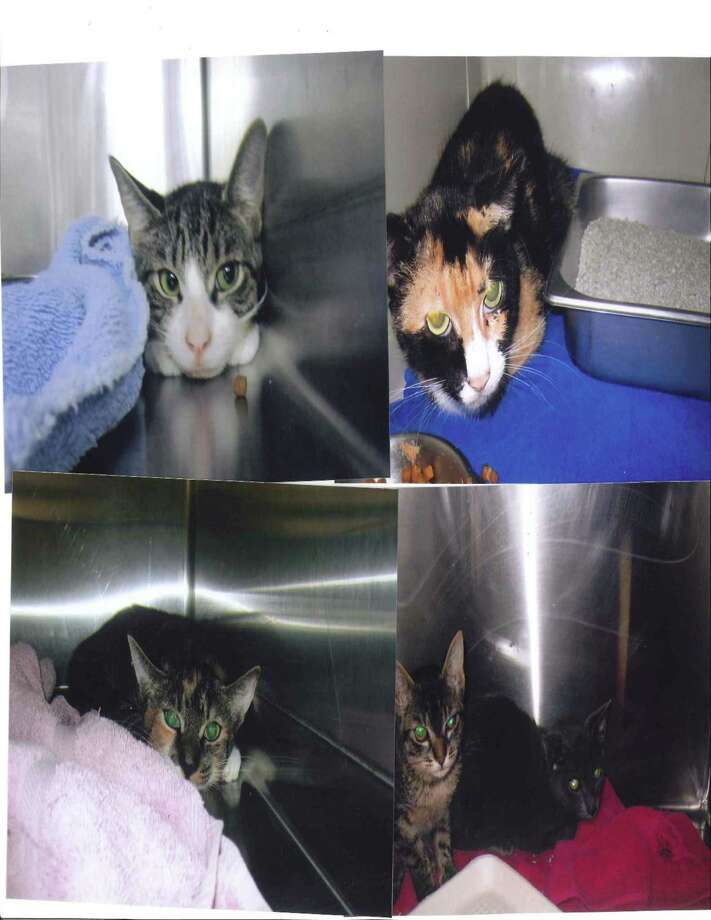 Some of the rescued cats.