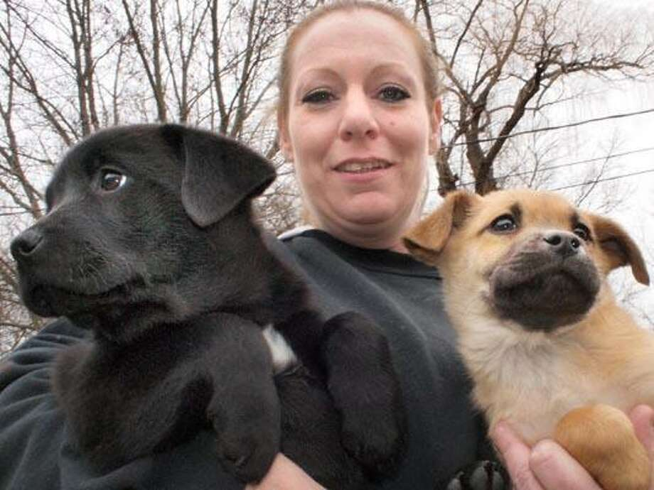 Erin O'Connor, kennel manager at Animal Haven in North Haven hold the two three month old lab shepard mix puppies that were abducted overnight from the shelter and are now safely back home. VM Williams 12.10.10
