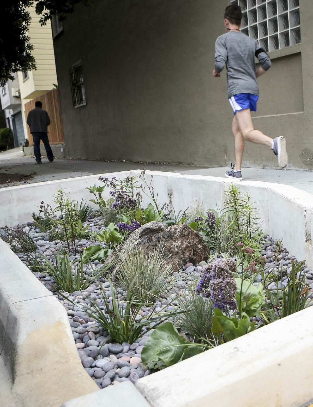 The first of the S.F. Public Utilities Commission's planned rain gardens, designed to dress up city streets while saving water, opens at Holloway and Jules avenues.