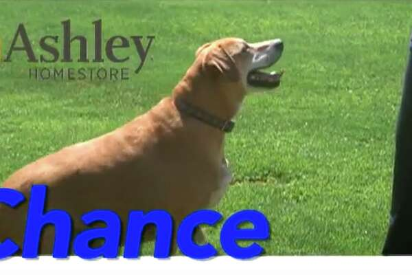 Chance is this week's pet of the week.