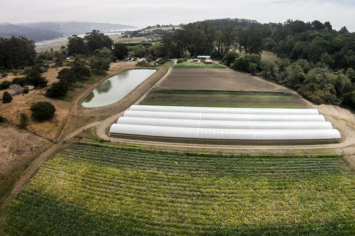 Star Route Farms on Thursday, Aug. 17, 2017, in Bolinas, Calif. Seen growing below are pumpkins.