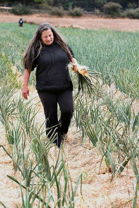 Farm manager Annabelle Lenderink shows Walla Walla onions at Star Route Farms in Bolinas. Photo: Liz Hafalia, The Chronicle