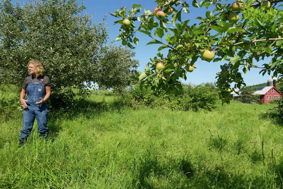 Farmer Beatrice Berle stands in her apple orchard at the Berle Farm on Wednesday, July 26, 2017, in Hoosick, N.Y.  Berle grows heirloom apples.    (Paul Buckowski / Times Union) Photo: PAUL BUCKOWSKI / 20041133A