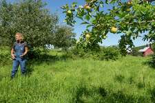 Farmer Beatrice Berle stands in her apple orchard at the Berle Farm on Wednesday, July 26, 2017, in Hoosick, N.Y.  Berle grows heirloom apples.    (Paul Buckowski / Times Union)