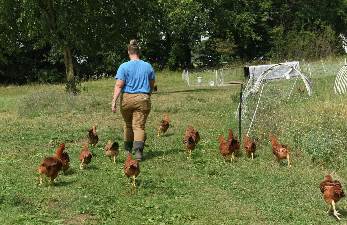 Leah Hennessy's chickens follow her at her Moxie Ridge Farm & Creamery on Thursday, Aug. 10, 2017 in Fort Edward, N.Y. (Lori Van Buren / Times Union)
