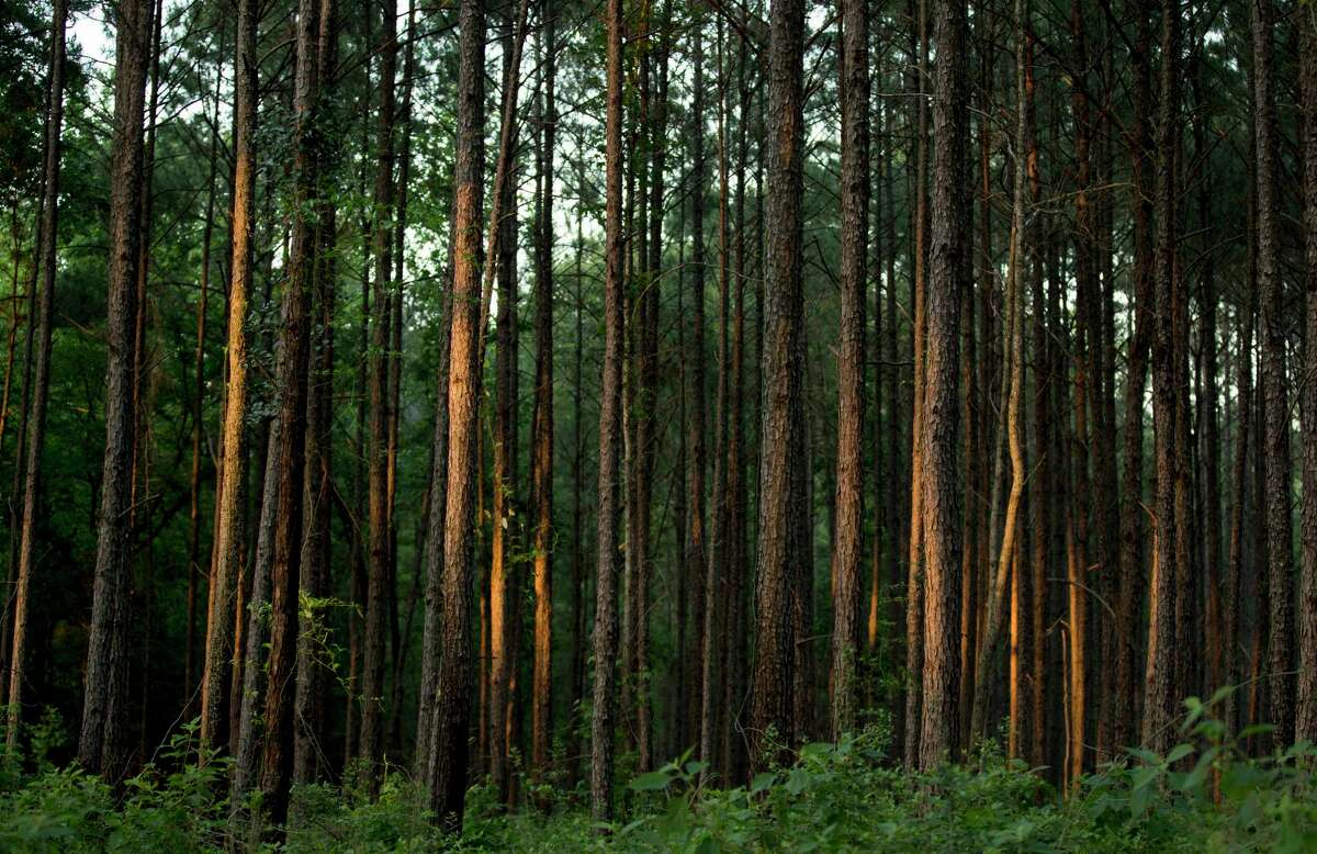 Sam Houston National Forest - Just north of Conroe, this park is perfect hiking, swimming and spending nights stargazing. Who knows, maybe you'll catch a glimpse of the Texan Big Foot.