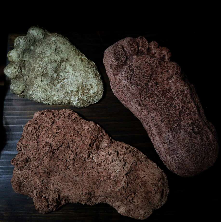 Yeti samples turn out to be bear bits