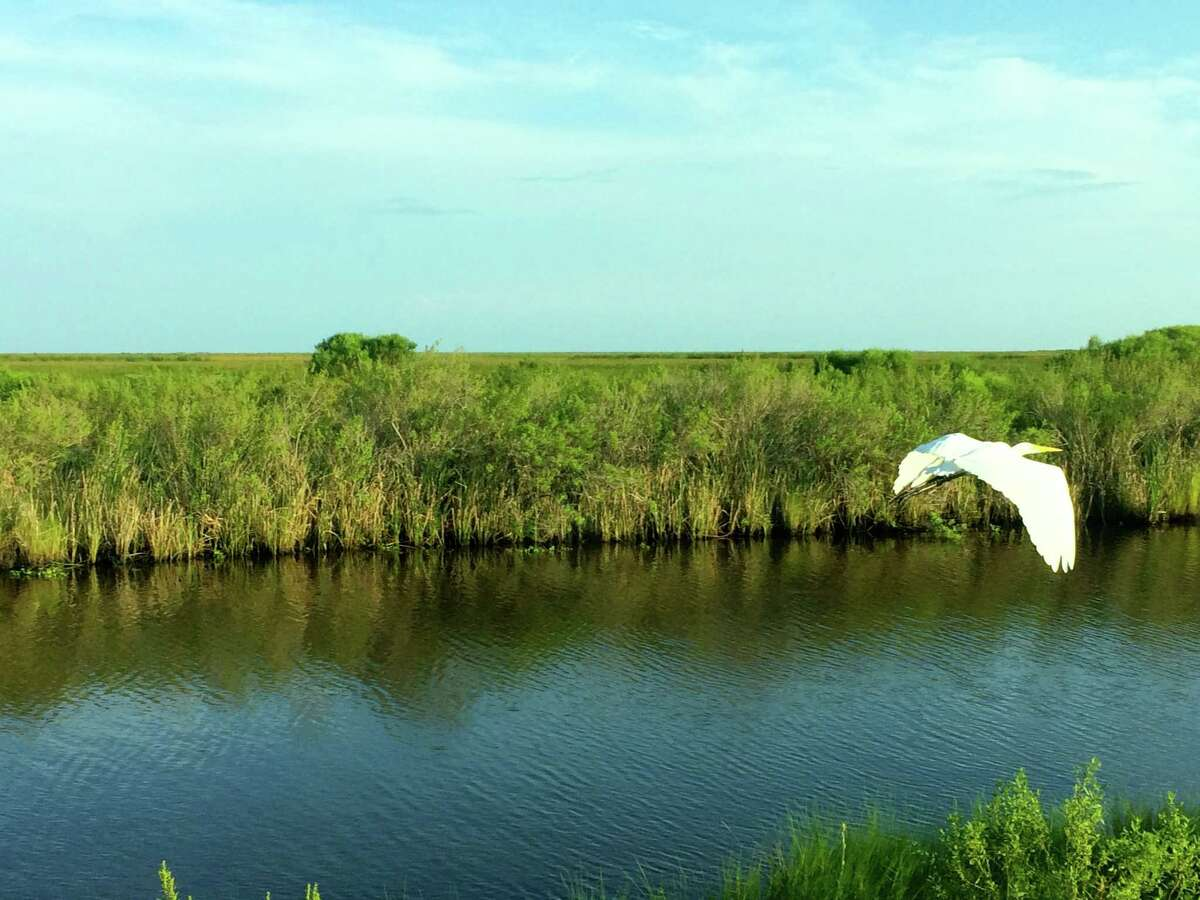 """An hour's drive from downtown Houston, Anahuac National Wildlife Refuge offers an undisturbed slice of nature. The Audubon Society calls it """"one of the must-visit sites of American birding."""""""