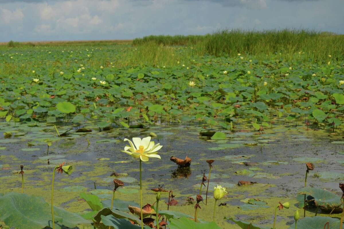 """Anahuac National Wildlife Refuge is just an hour's drive from downtown Houston but offers an undisturbed slice of nature, photographed on Aug. 5, 2017. The Audubon Society calls the refuge """"one of the must-visit sites of American birding."""""""
