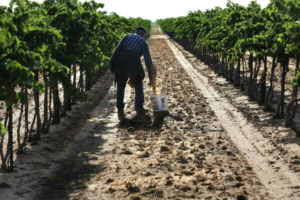 Dying Vines How Herbicides Are Damaging And Destroying High