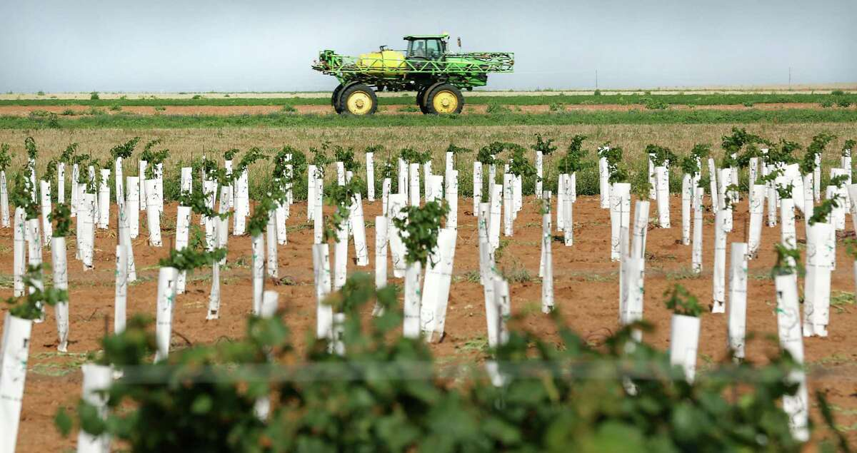 Young vines are secured at the Jet Wilmeth Vineyards in Tokio. A field sprayer is passing by.