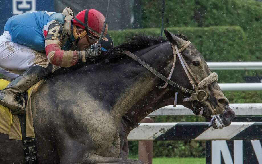 This is truly winning by a nose when #4 Marriage Feber with jockey Joel Rosario bests #10 Conquest Twister with jockey Jose L. Ortiz to the wire in the third race on card at the Saratoga Race Course Friday Aug. 17, 2017 in Saratoga Springs, N.Y.  (Skip Dickstein/Times Union) Photo: SKIP DICKSTEIN