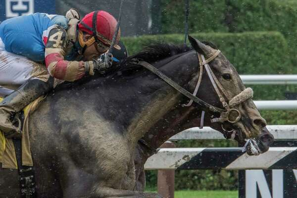 This is truly winning by a nose when #4 Marriage Feber with jockey Joel Rosario bests #10 Conquest Twister with jockey Jose L. Ortiz to the wire in the third race on card at the Saratoga Race Course Friday Aug. 17, 2017 in Saratoga Springs, N.Y.  (Skip Dickstein/Times Union)