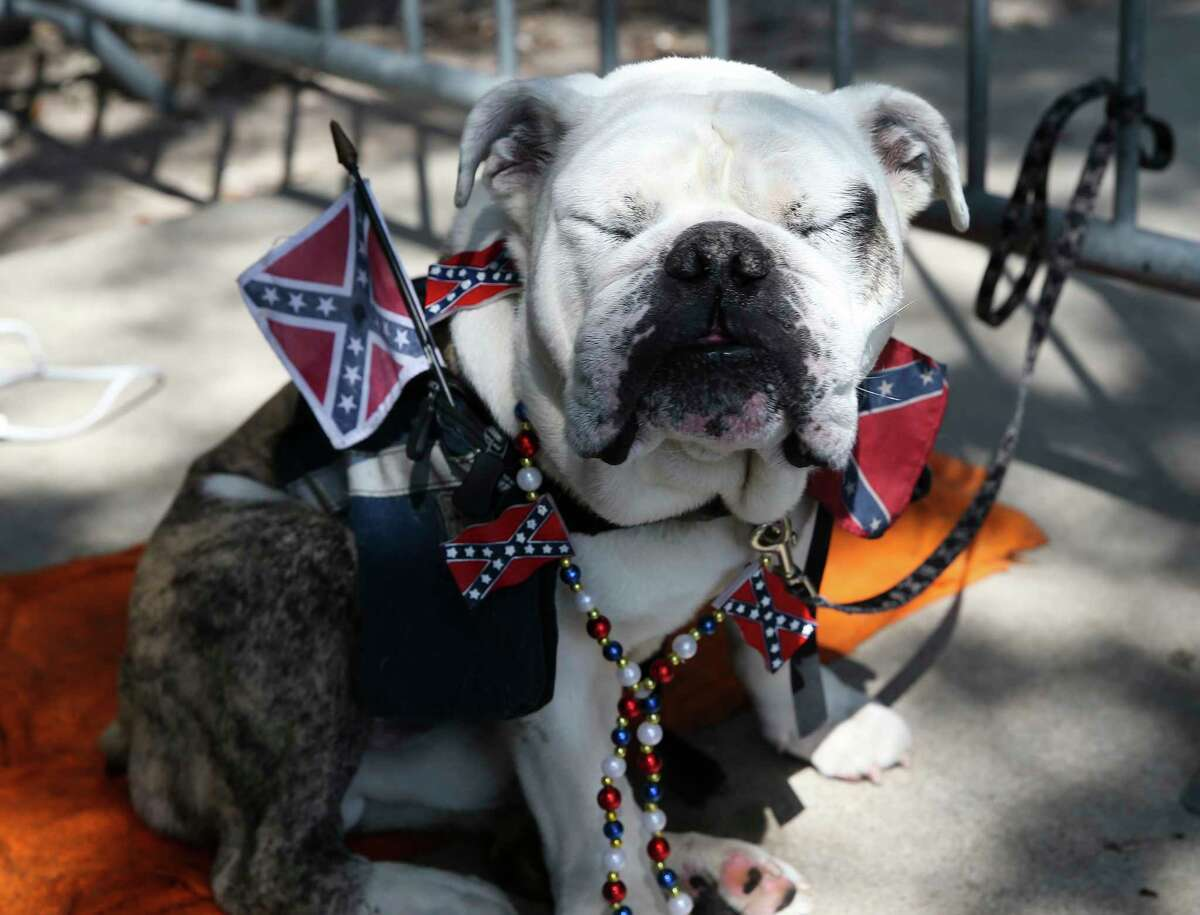 Confederate Shorty the dog is decked out and staying in the shade to counter-protest a Black Lives Matter protest that is asking to take down the Spirit of the Confederacy statue Saturday, Aug. 19, 2017, in Houston.