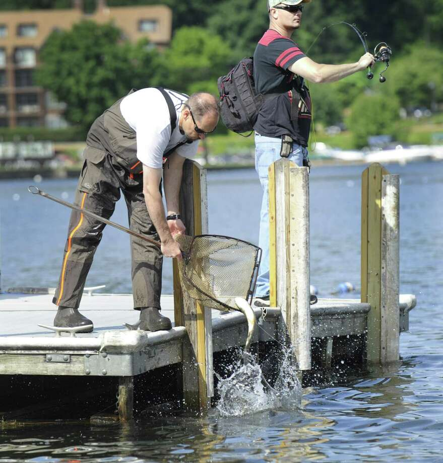Todd Bobowick, left, releases carp into Candlewood Lake at the town boat ramp in Danbury, Wednesday morning, as Adam Janesky does some fishing. The Candlewood Lake Authority has added more sterile grass carp into the lake to combat the Eurasian watermilfoil, Wednesday, June 8, 2016. Photo: Carol Kaliff / Hearst Connecticut Media / The News-Times