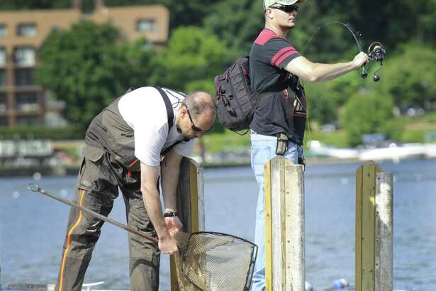 Todd Bobowick, left, releases carp into Candlewood Lake at the town boat ramp in Danbury, Wednesday morning, as Adam Janesky does some fishing. The Candlewood Lake Authority has added more sterile grass carp into the lake to combat the Eurasian watermilfoil, Wednesday, June 8, 2016.