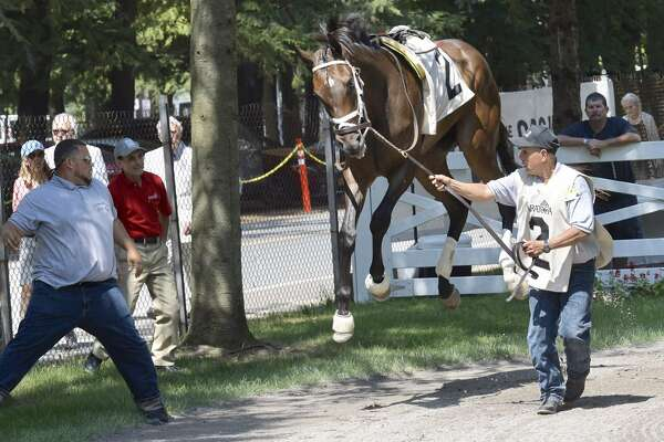 A thoroughbred called Ninetyeighttwo may be affected by the eclipse before the first race on Monday, Aug. 21, 2017, at Saratoga Race Course. (Skip Dickstein/Times Union)