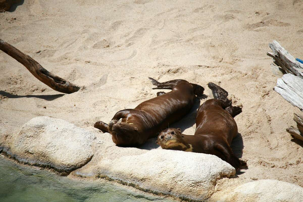 Maximo and Manuel soak up the sun post-swim.