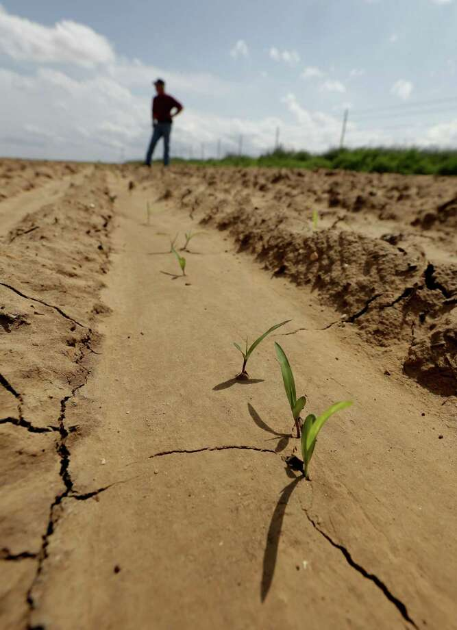 Don Stoker looks over his field where crops are now just barely starting to grow again after it was affected by a wastewater spill as a byproduct of oil production near Snyder, Texas. A pipeline joint failure in November 2012 spilled salt water causing a large swath of his farm ground to become barren and killed a stand of nearby hackberry trees. Photo: Charlie Riedel — The Associated Press  / AP