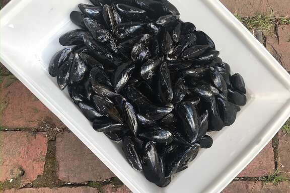 Mussels for Jessica Battilana's Mussels with Chorizo, Chickpeas and Fried Bread are seen on Sunday, July 30, 2017 in Woodstock, VT.