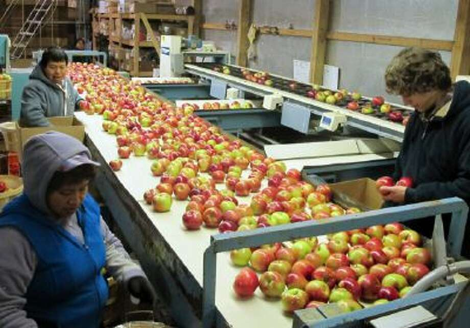 In this Nov. 7, 2013 photo workers at King Orchards in Central Lake, Mich., prepare apples for shipment to markets in Detroit and elsewhere.
