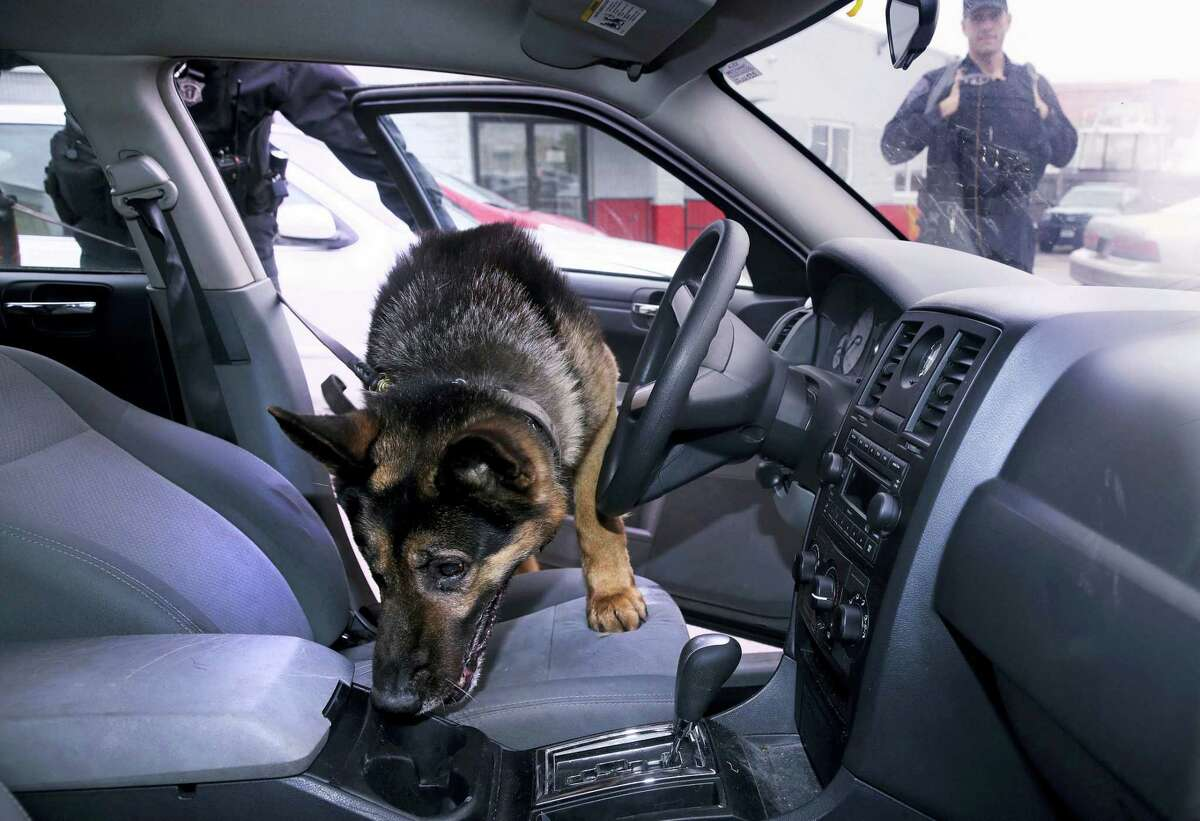 In this Tuesday, May 30, 2017, photo Massachusetts State Police K-9, Maximus, searches a car for drugs with Trooper Brian Bonia, left, during a training session in Revere, Mass. During drug raids, police dogs literally follow their noses to sniff out narcotics, but now the powerful synthetic opioid fentanyl could be deadly to the K-9s. Police have a new strategy for protecting their four-legged partners, by carrying Naloxone for their dog, the same drug to reverse heroin overdoses in humans. At right is Mass. State Trooper Brian Cooper. (AP Photo/Charles Krupa)