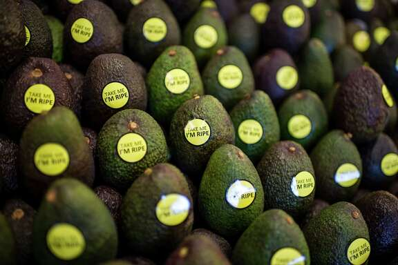 California avocado production is forecast to plunge 46 percent compared with last year.