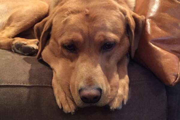 A San Antonio man is offering a $3,000 reward for the return of his dog, Amigo, who was inside the man's pickup truck when it was stolen from North Star Mall on Friday.