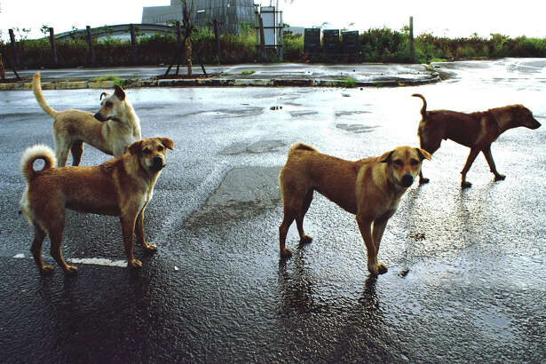 Indian authorities shuttered a company after its alleged dumping of industrial waste led to stray dogs turning blue.