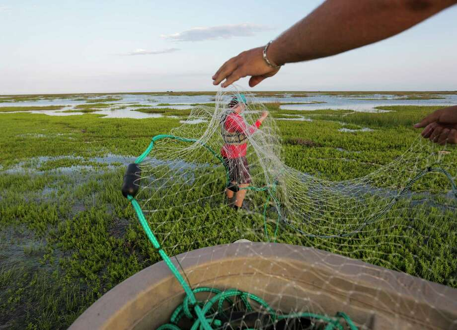 Texas Parks and Wildlife intern Mathew Dove works on a gill net in shallow waters on Matagorda Bay to conduct a fish count. Photo: Elizabeth Conley, Houston Chronicle / © 2017 Houston Chronicle