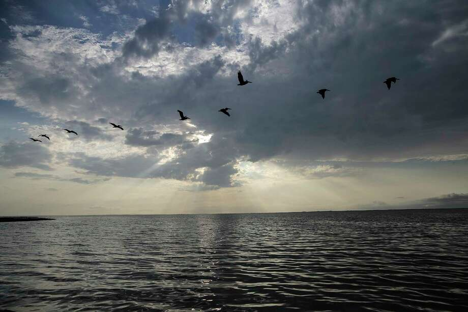 A flock of pelicans make their way over Matagorda Bay as the Texas Parks and Wildlife researchers sail out to put out gill nets for a fish count. Photo: Elizabeth Conley, Houston Chronicle / © 2017 Houston Chronicle
