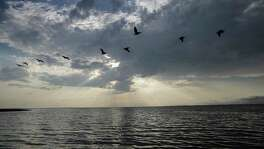 ***for McQuires' Gulf Coast story A flock of pelicans make their way over Matagorda Bay as the Texas Parks and Wildlife researchers sail out to put out gill nets for a fish count on Monday, May 22, 2017, in Palacios.