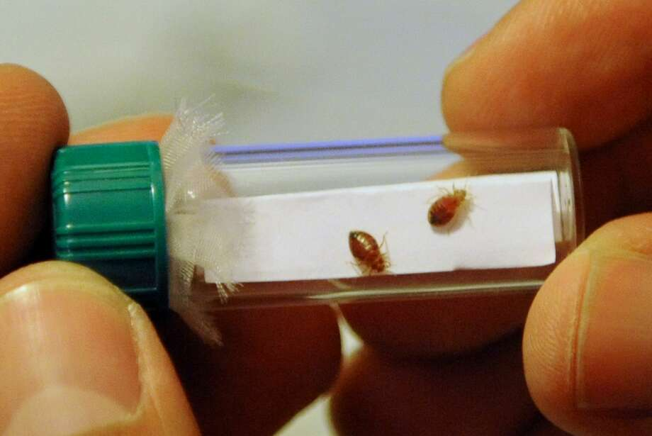 Things to know about bed bugsThe summer months are some of the busiest for pest control experts. Staying informed is the best way to prevent infestations.See what home owners need to know about bed bugs and their infestations.  Photo: STAN HONDA/AFP/Getty Images