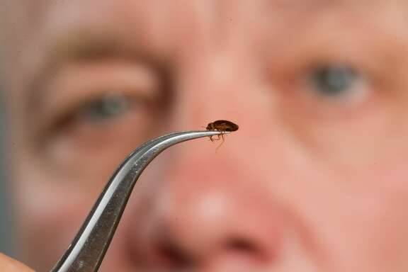 Man studying bed bug. (Photo by: Edwin Remsburg/VW Pics via Getty Images)